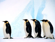 antarctica_pv